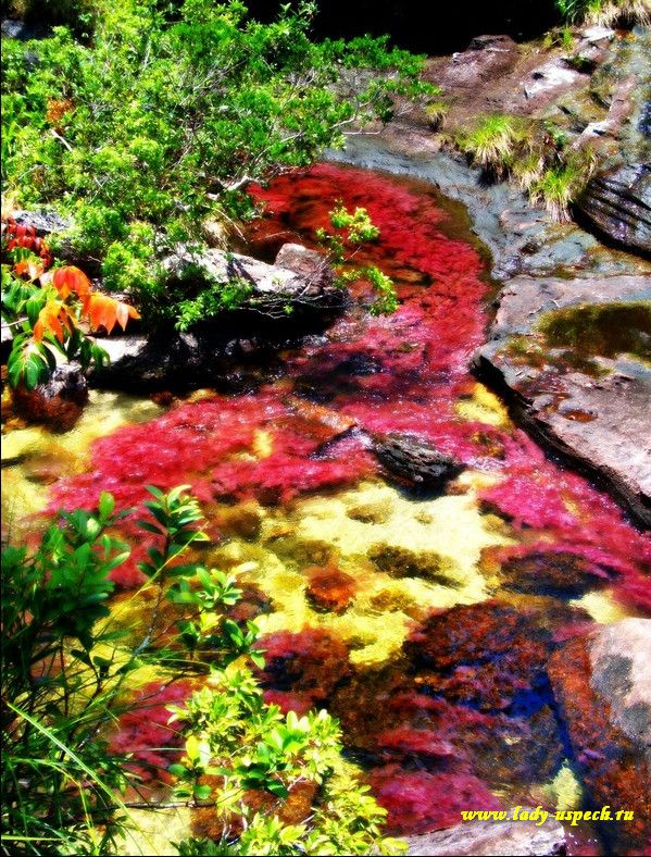 The River of Five Colors: Cano Cristales, Colombia