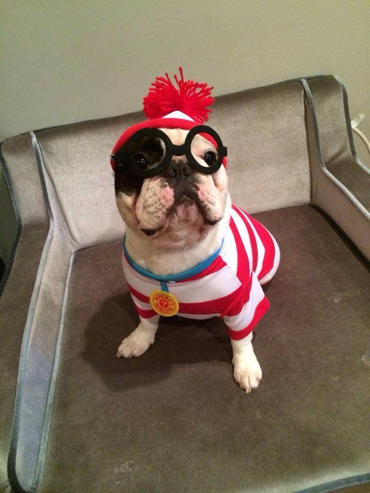 Best 25+ Bulldog costume ideas on Pinterest | Bull dog, Baby ...