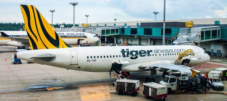 Tiger Airways at Changi Airport