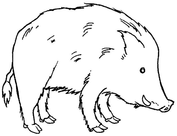 wildschweine ausmalbilder ausmalbilder wildschweine