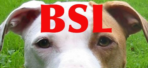 Breed Specific Legislation and the Death of Lennox