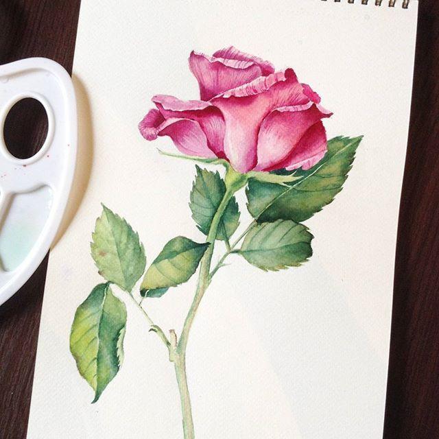 """Для тех, кто предпочитает в домашней обстановке неспешно изучать онлайн уроки: мой мини-курс 《Акварельная роза》 Курс состоит из нескольких блоков, включая разбор рисунка, особенности рисования  с натуры, подбор палитры и этапы ведения работы. Шаг за шагом вы сможете научиться изображать цветы акварелью.  Курс доступен на сайте arttsapko.ru  в разделе """"онлайн-курсы"""" @arttsapko Стоимость 1990р.  На фото работа моей талантливой ученицы  Work of my student"""