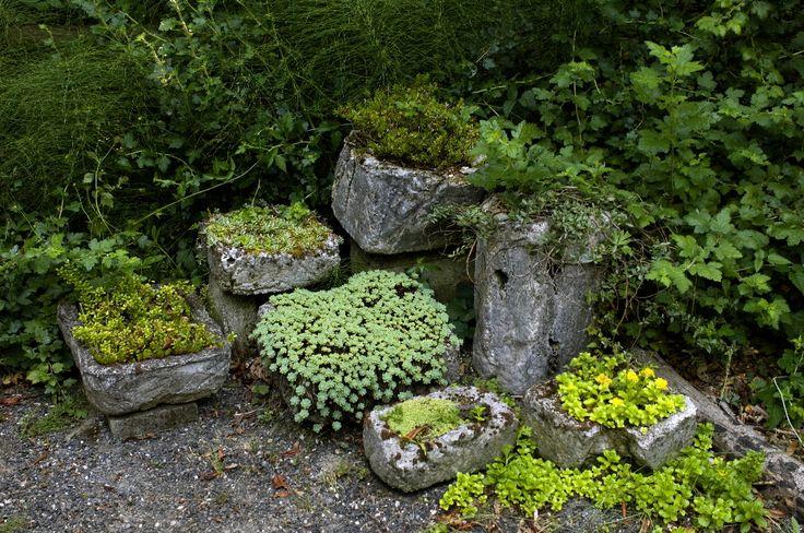 Hypertufa garden