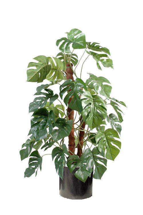 plante exotique quebec