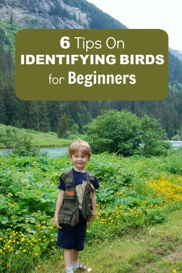 Bird identification for beginners.