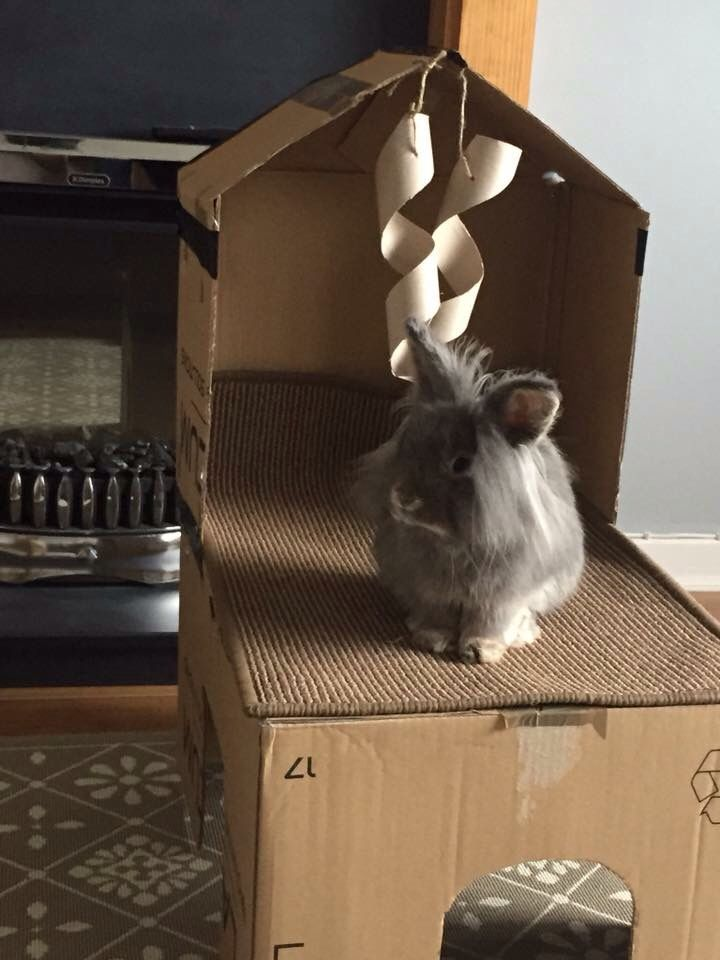 99 best images about rabbit toys boredom busters on for Homemade bunny houses