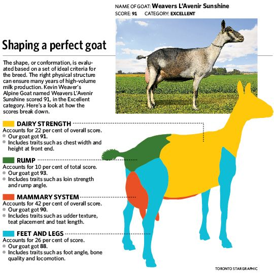 Follow these steps to grow a better goat | Toronto StarLinear #goatvet likes appraisals