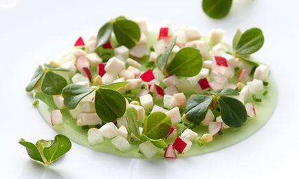 Lemon-balm Jelly with Small Spring Vegetables with Maille Moutarde Petits Pois et Pointe de Fleur de Ciboulette (Mustard with Green Peas and Chive Flowers)