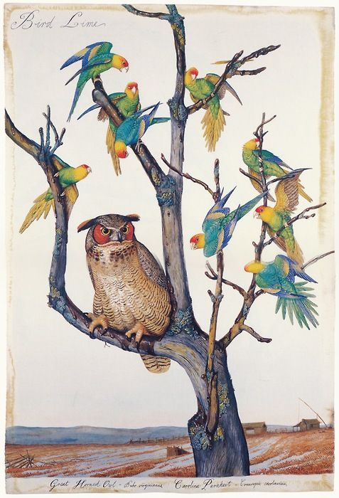 Walton Ford  Bird Lime  Watercolour, gouache, pencil, and ink on paper, 2005  From Pancha Tantra