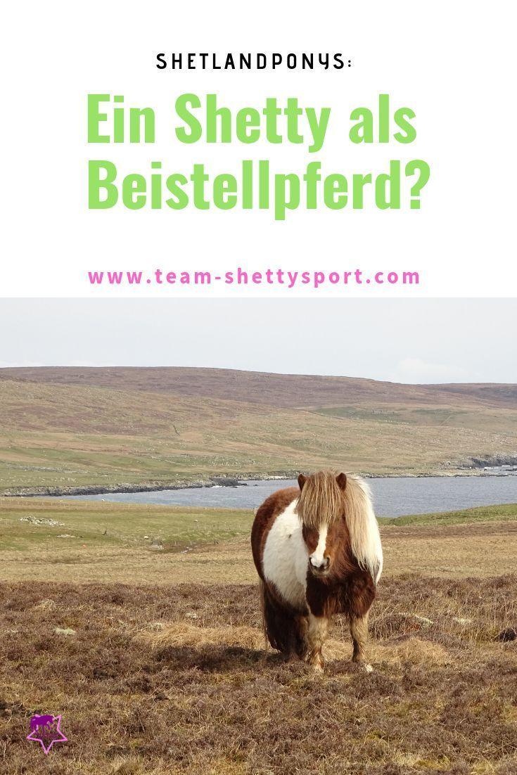 Shetty Als Beisteller Pferde