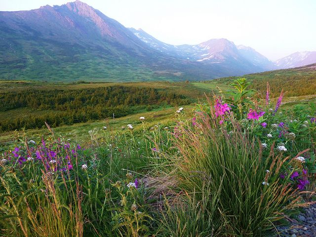 TYPEWRITER: Nuda na Aljašce  Experimentální povídka založená na dialogu dvou osob, aneb co by mohly způsobit drby  #Alaska #povídky #povídka #literatura #blog #český #czech #experiment