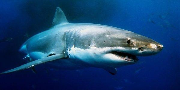 Drones με τεχνητή νοημοσύνη για εντοπισμό καρχαριών σε παραλίες της Αυστραλίας