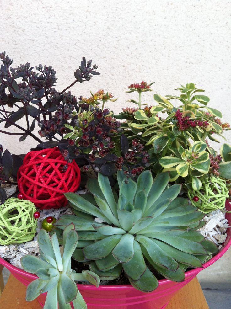 composition plantes grasses 3 succulents contenant rond en zinc fuschia 27 00 pinterest. Black Bedroom Furniture Sets. Home Design Ideas