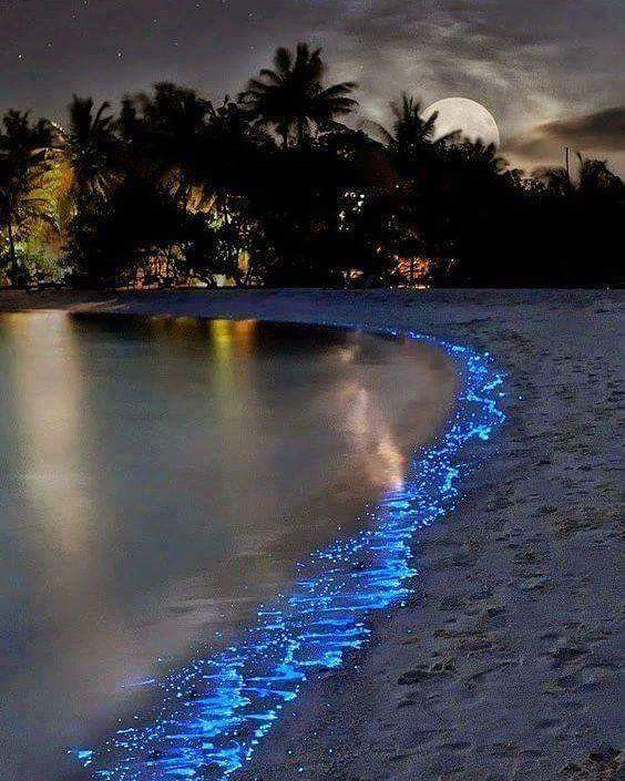 """El Mar de Estrellas en la isla Vaadhoo-Maldivas.  La luz biológica, en las olas es el producto de…"""""""