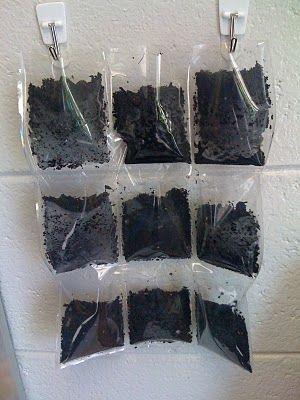 plantjes kweken? verticale tuin in je klas en je kan zelfs de wortels zien groeien