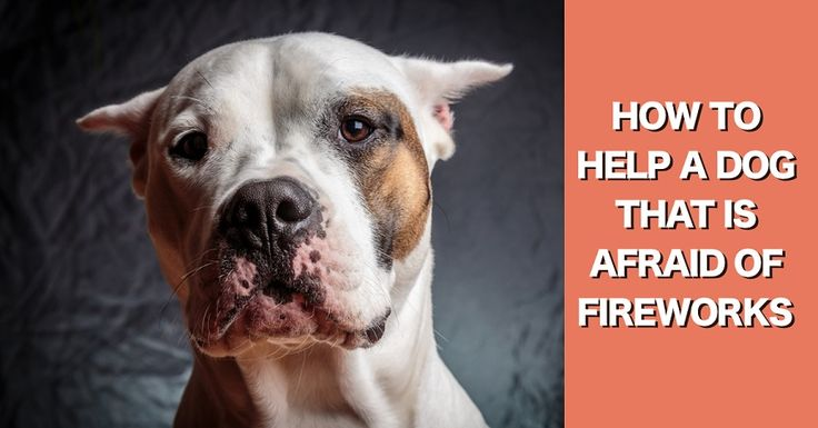 How to help a dog that is afraid of fireworks, thunder, and other loud noises.