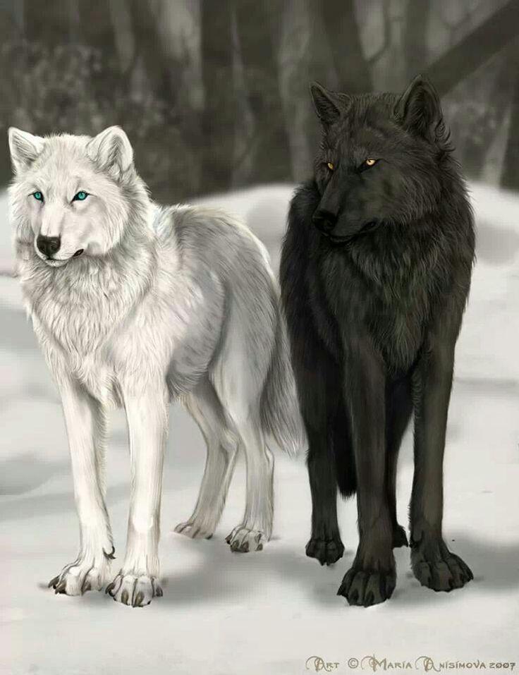 Картинки белых и черных волчица