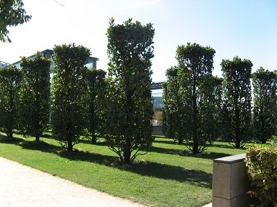 Parc Andre Citroen in form geschnittene Magnolienbäume Foto Brandt