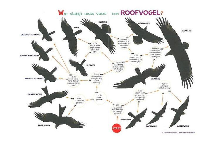 Zoekkaart Roofvogelsilhouetten