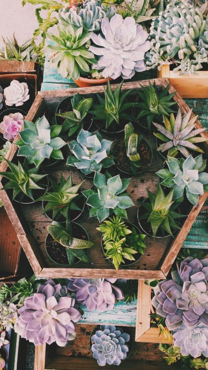 Shades of green, teal, & lavender succulents