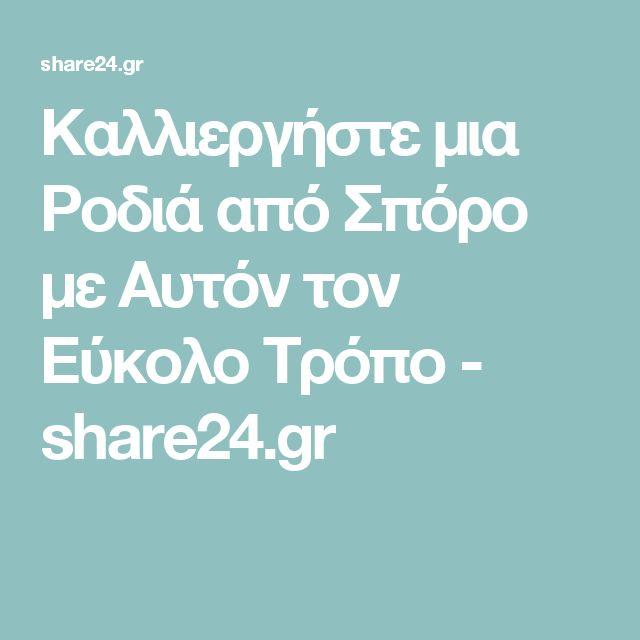 Καλλιεργήστε μια Ροδιά από Σπόρο με Αυτόν τον Εύκολο Τρόπο - share24.gr