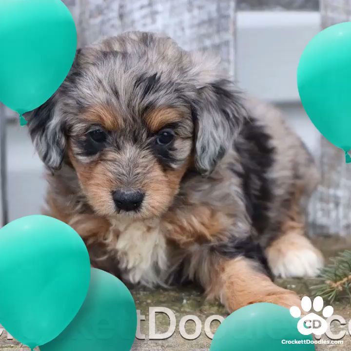 Photo From Www Crockettdoodles Com Cute Puppies And Kittens