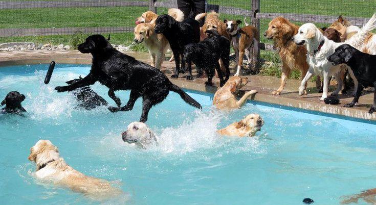 une journee dans la piscine pour chien lucky puppy 2   Piscine pour chiens [video]   soin plongeon piscine photo Lucky Puppy image GIF garde...