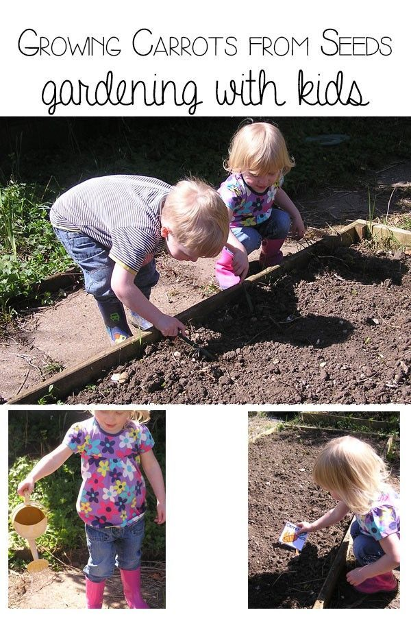 Growing Carrots from seeds - gardening with kids.