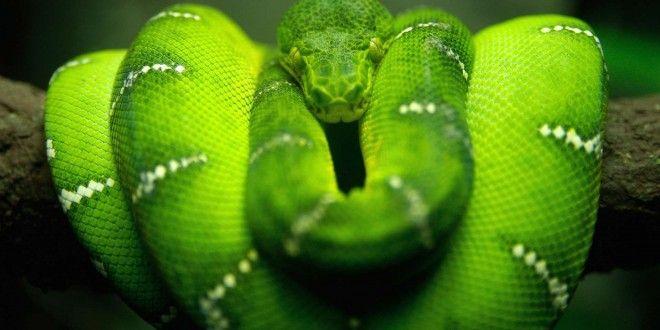 Snake Wallpaper HD Best Collection