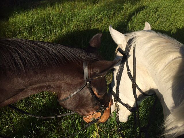 Horses, grass and guavas