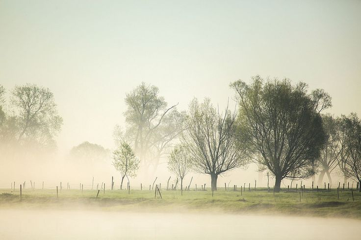 Wiosenna Biebrza / Spring time in Biebrza National Park, Poland   by PolandMFA