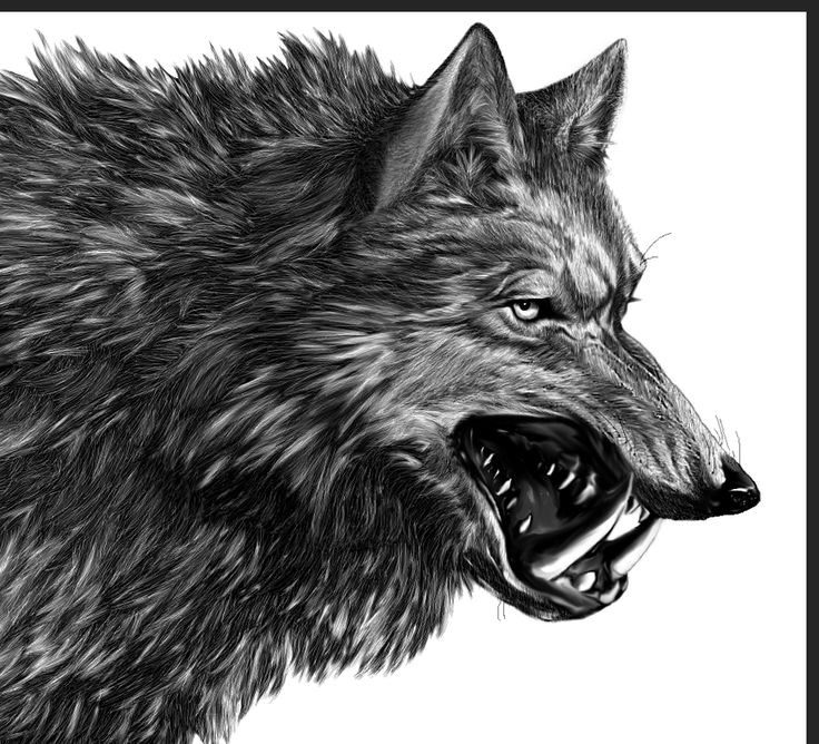 """direwolf with the words """"winter is coming"""""""