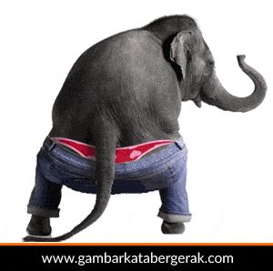 Gambar animasi binatang lucu bergerak, gajah di goyang :D