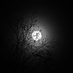 under a full moon: Full Moon, Photo, Branches, The Moon