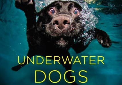 underwater-dogs-swimming-dogs