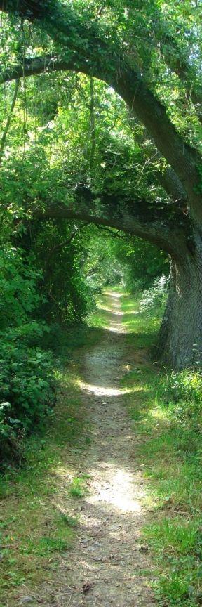 Caminho na floresta.