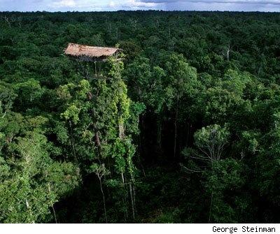 Tree House - Indonesia
