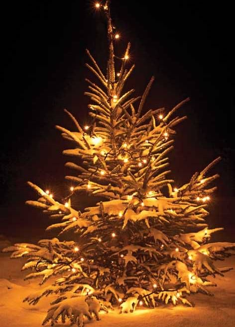 To make your Christmas party more attractive and to look like festival you can choose Aladdins Uthyrning which is a company which provides Christmas party decorations like christmas tree light, table decoraton, etc on rent.