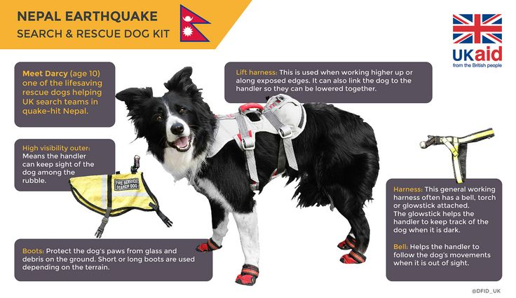 An infographic about rescue dogs helping in Nepal.