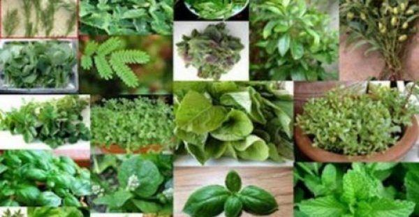 Αυτές είναι οι ασθένειες που θεραπεύει κάθε βότανο – Δείτε τον πλήρη κατάλογο