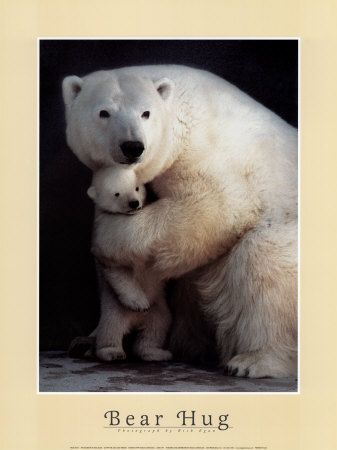 Cute Animal Poster & Story: Story of animals hugging / animal hug ...