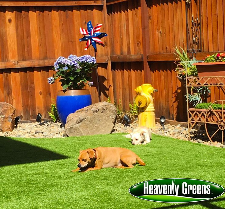 A family in Gilroy with four dogs needed a solution to their backyard problem and decided to install artificial grass for dogs. Take a look at the result!