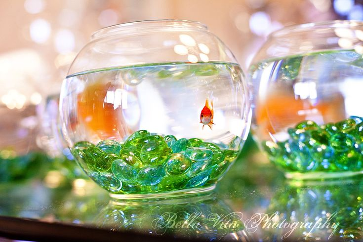 Using a decorated fishbowl as the base for your budget wedding centerpiece lets your creativity shine while keeping costs down!