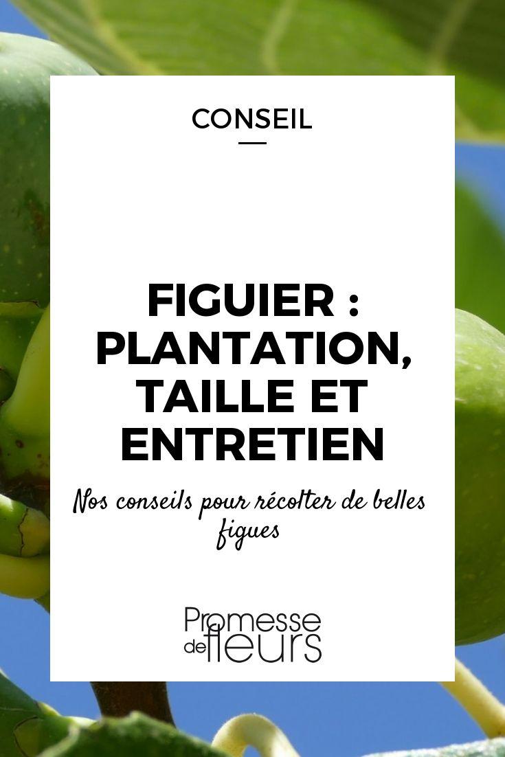 30 best taille des arbres images on pinterest backyard ideas permaculture and potager garden - Comment tailler un ficus ...