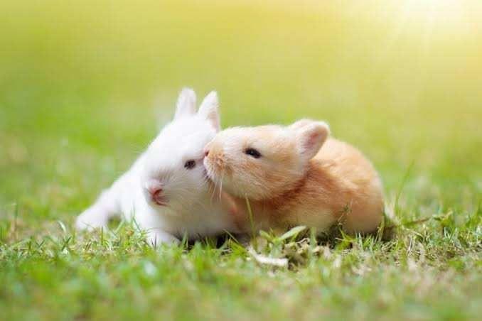 الحب عند الحيوانات بين الغزل العفيف واستعراض القوة Animals Animal Photo Animal Companions