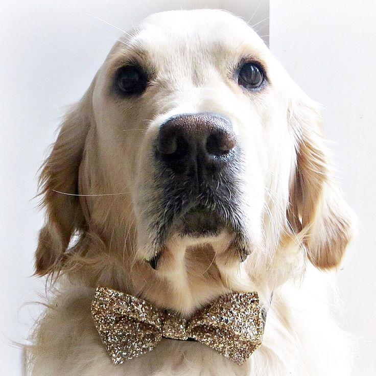 New bow tie