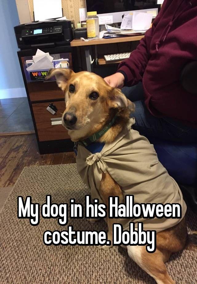 """      My dog in his Halloween costume. Dobby"""