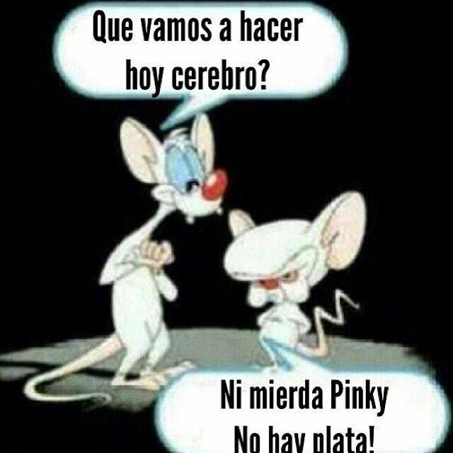 Pinki cerebro y no hay plata!!