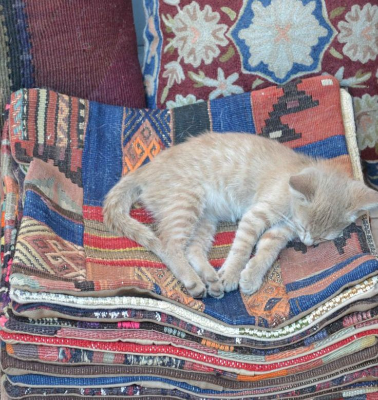 Just one of the things I loved about Istanbul - how they treat cats! this one was lying there every morning taking in some sunshine.