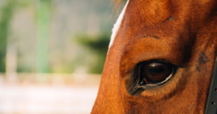 Travelling can be particularly stressful for horses so it is important to take care to keep them healthy and hydrated. Read this article which outlines some of the steps you can take to ease your and your horse's travel stress: http://qoo.ly/hr5yg